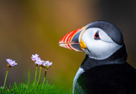 'Puffin' by Min Jing ( 9 marks )