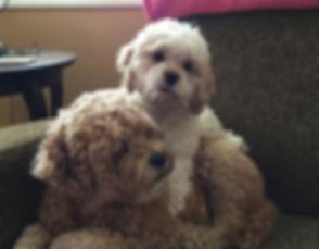 Cheryl Dumas's  Pup's.jpg