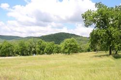 Arkansas Field