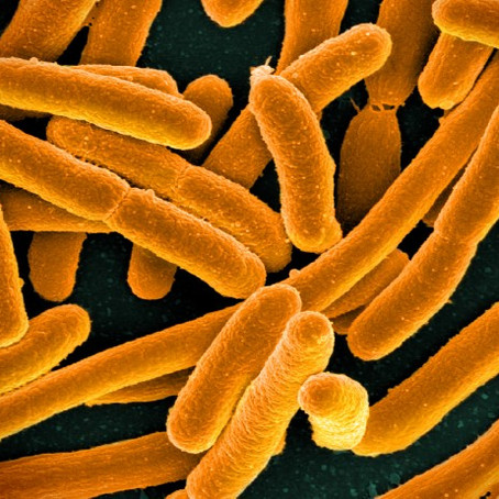 Crean el primer microorganismo con DNA totalmente rediseñado
