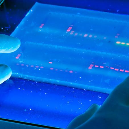 ¿Biotecnología o biología sintética?