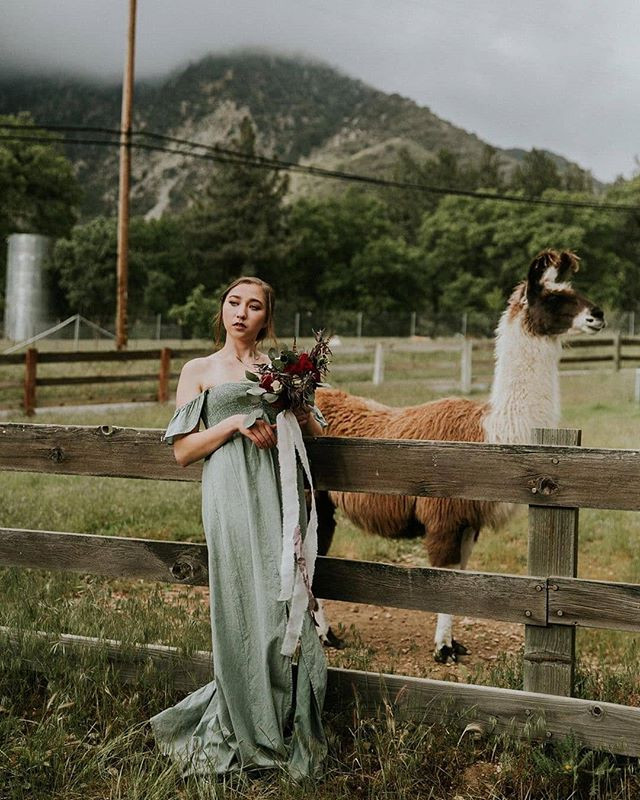 First goats, then huskies, now an alpaca