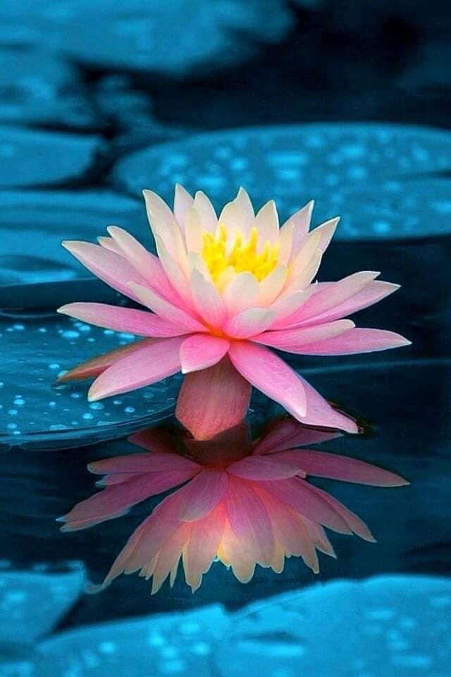 Kahuna Healing Journey