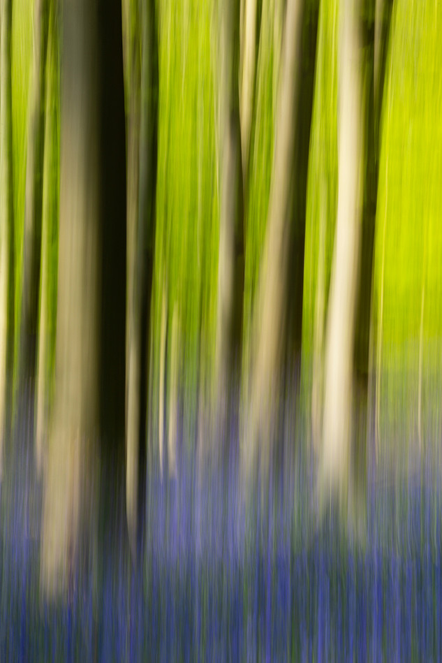 Pure Nature #29, Sonian Forest, Brussels, 2018