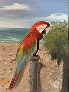 Parrot at Coquina Beach.jpg