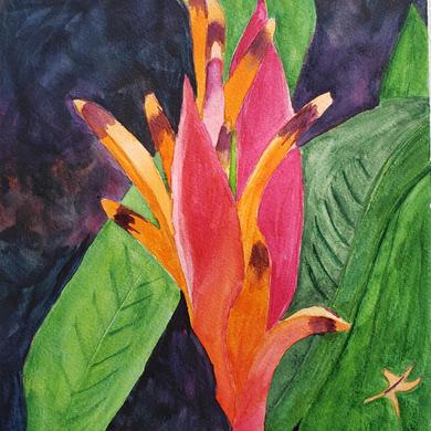 Tahitian Heliconia