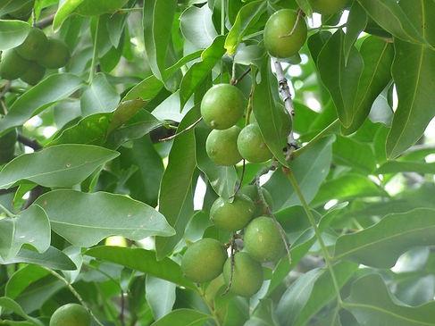 2019-04-14.jordan.fruta.mamoncillo (2).j
