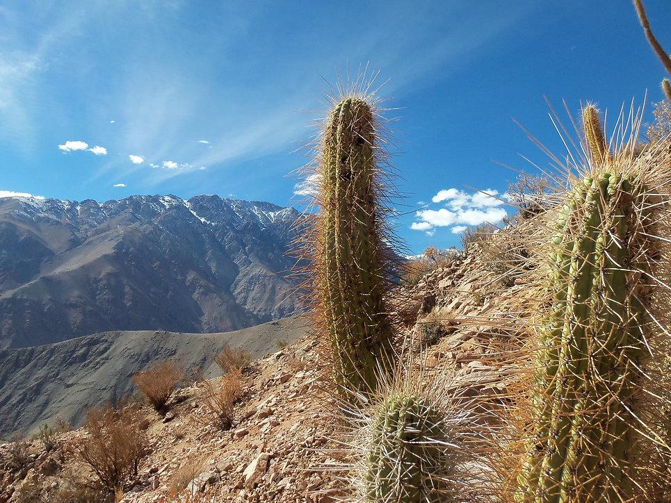 CHILE-L002-Valle de Elqui compress.jpg