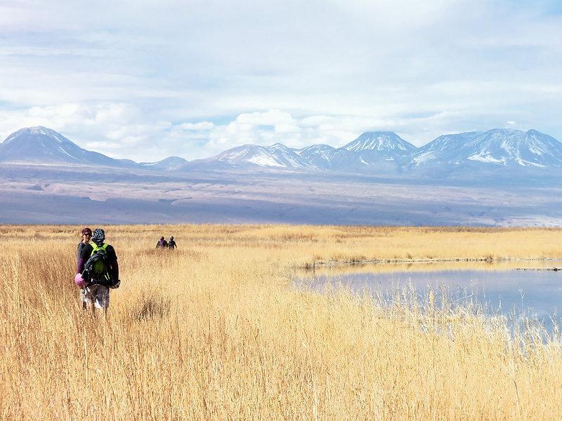 Lagune salée dans le désert d'Atacama