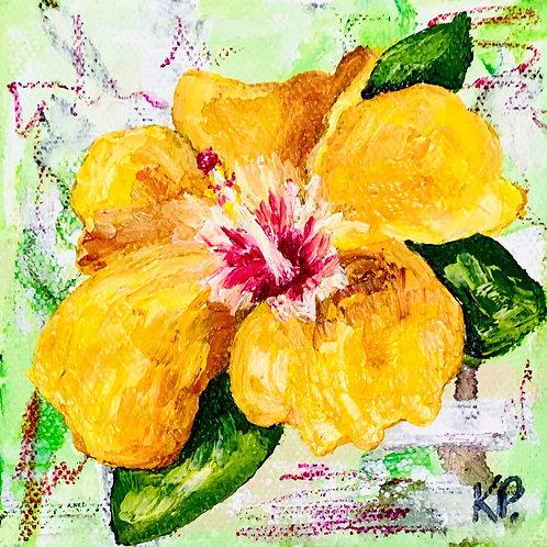 Hibiscus - 4x4