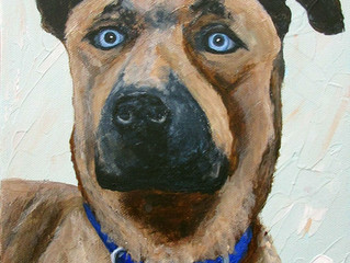 Pet Portrait Fundraiser