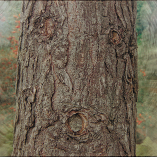 MAN OR TREE