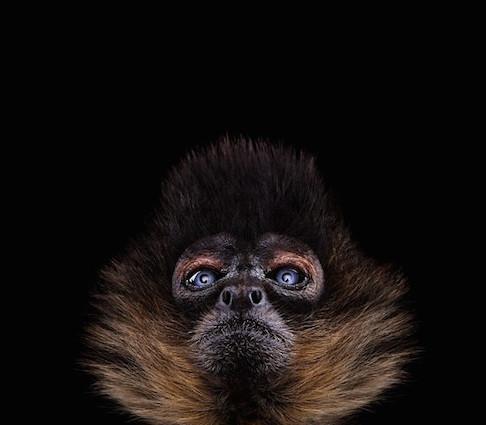 29 Hermosos retratos de animales salvajes