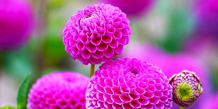 Flores 42
