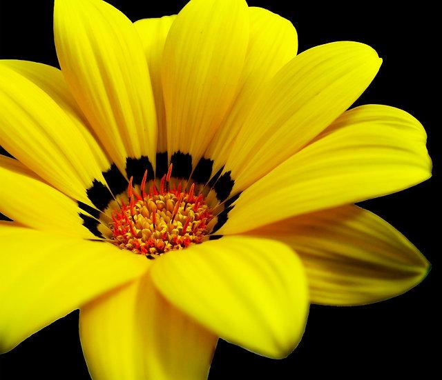 Flores 43