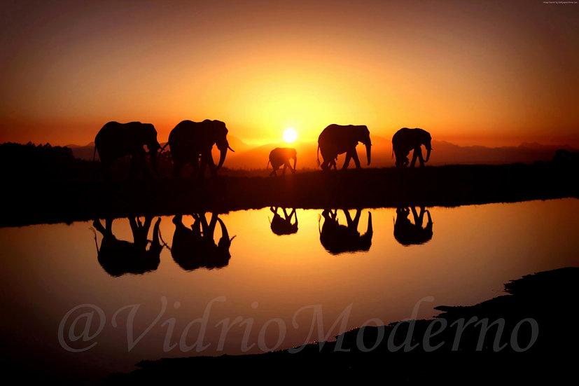 Elefantes al atardecer