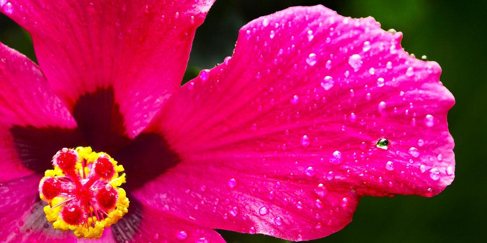 Flores 18