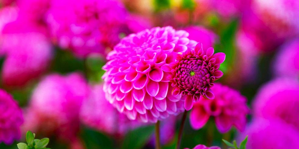 Flores 41