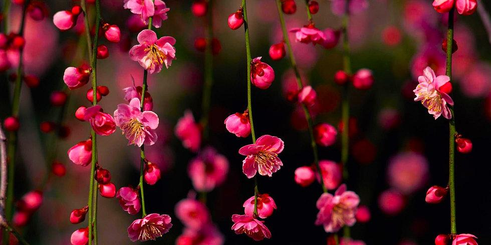 Flores 39