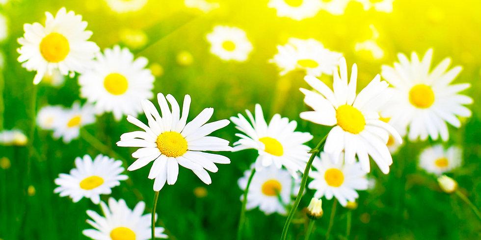 Flores 48