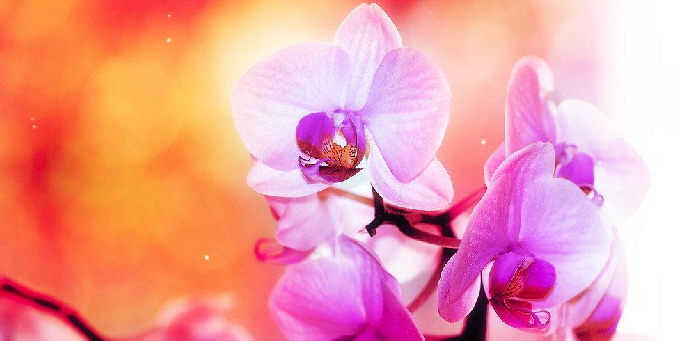 Flores 50