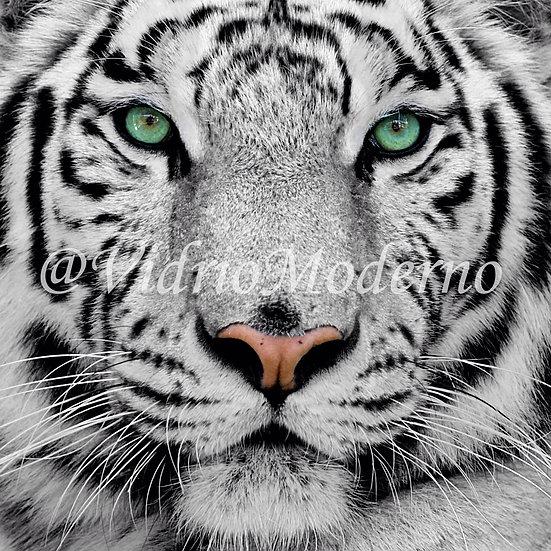 Tigre Siberiano