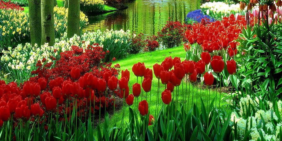 Flores 27