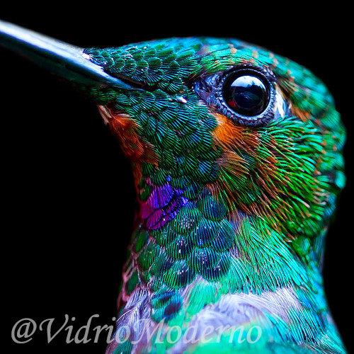 Detalles del colibrí
