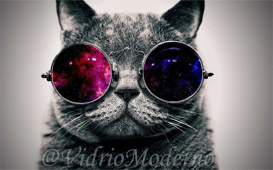 Cat Glasses
