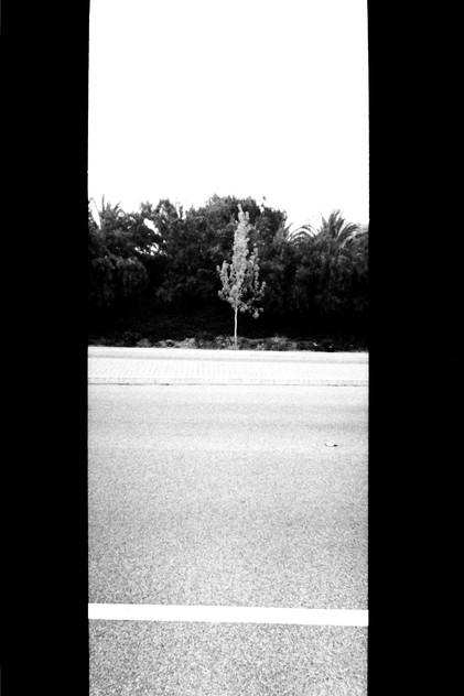 """""""One Tree"""""""
