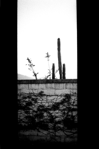 """Three Cactuses"""