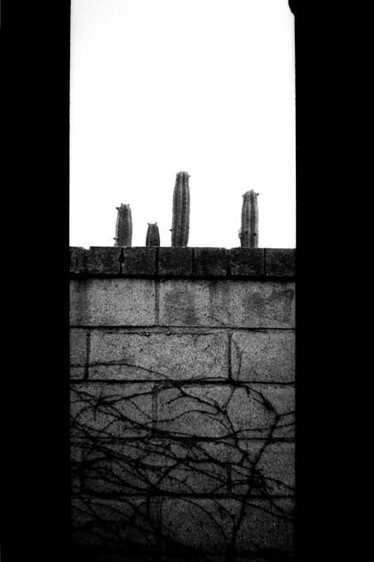 """Four Cactuses"""
