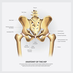 human-anatomy-hip-illustration.jpg