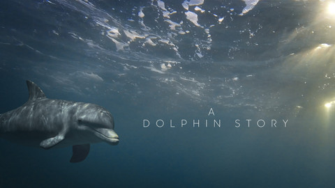 A DOLPHIN STORY