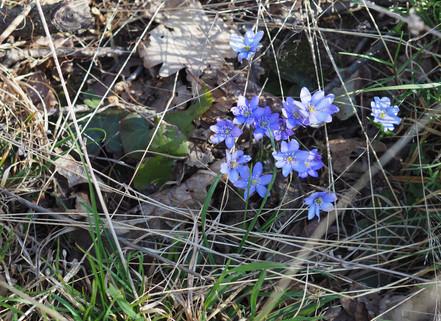Květnatý les na jaře