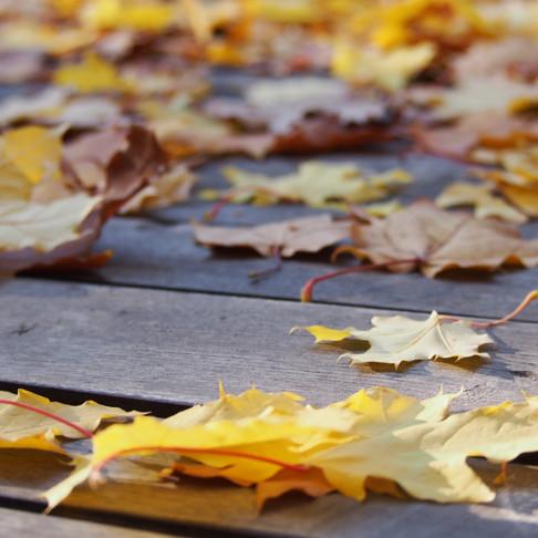 Podzim našlapuje
