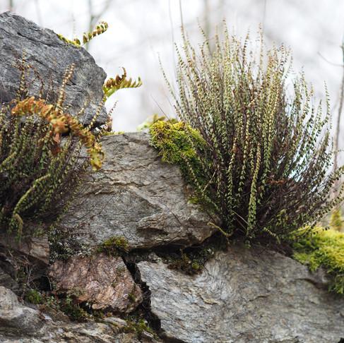 Jak daleko jsou Rychlebské hory?