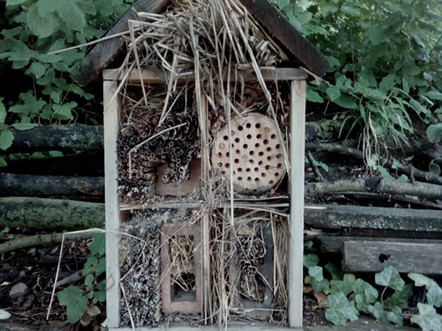 Hmyzí domeček: párty záminka