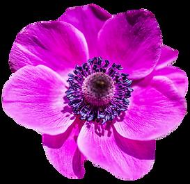 PNGPIX-COM-Flower-PNG-Transparent-Image-
