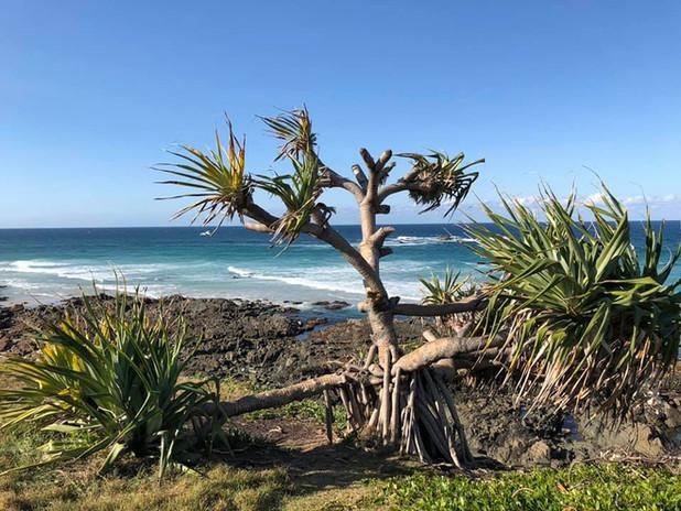 Cabarita Beach Photo 2