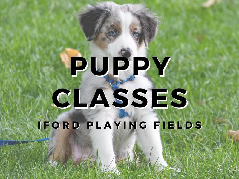 4:30pm Puppy Class