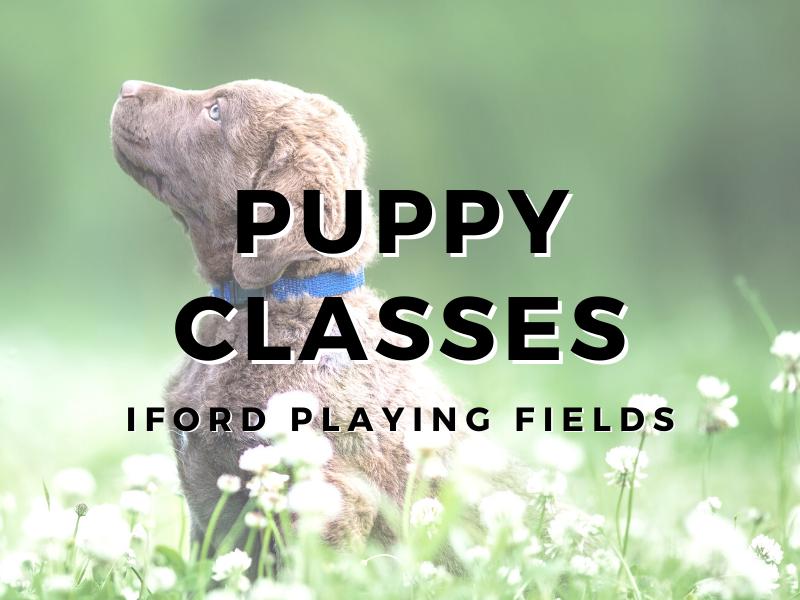 5:30pm Puppy Class