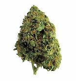 CBD wholesaler, thecbdwholesaler.com, cannabis, CBD, CBG, thecbdwholesaler,420,weed , beu, cannabis, marie jane