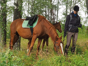 horse back trail trip