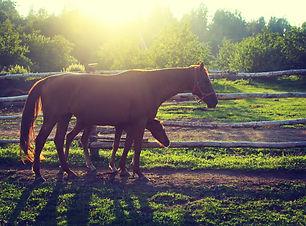 summer at farm