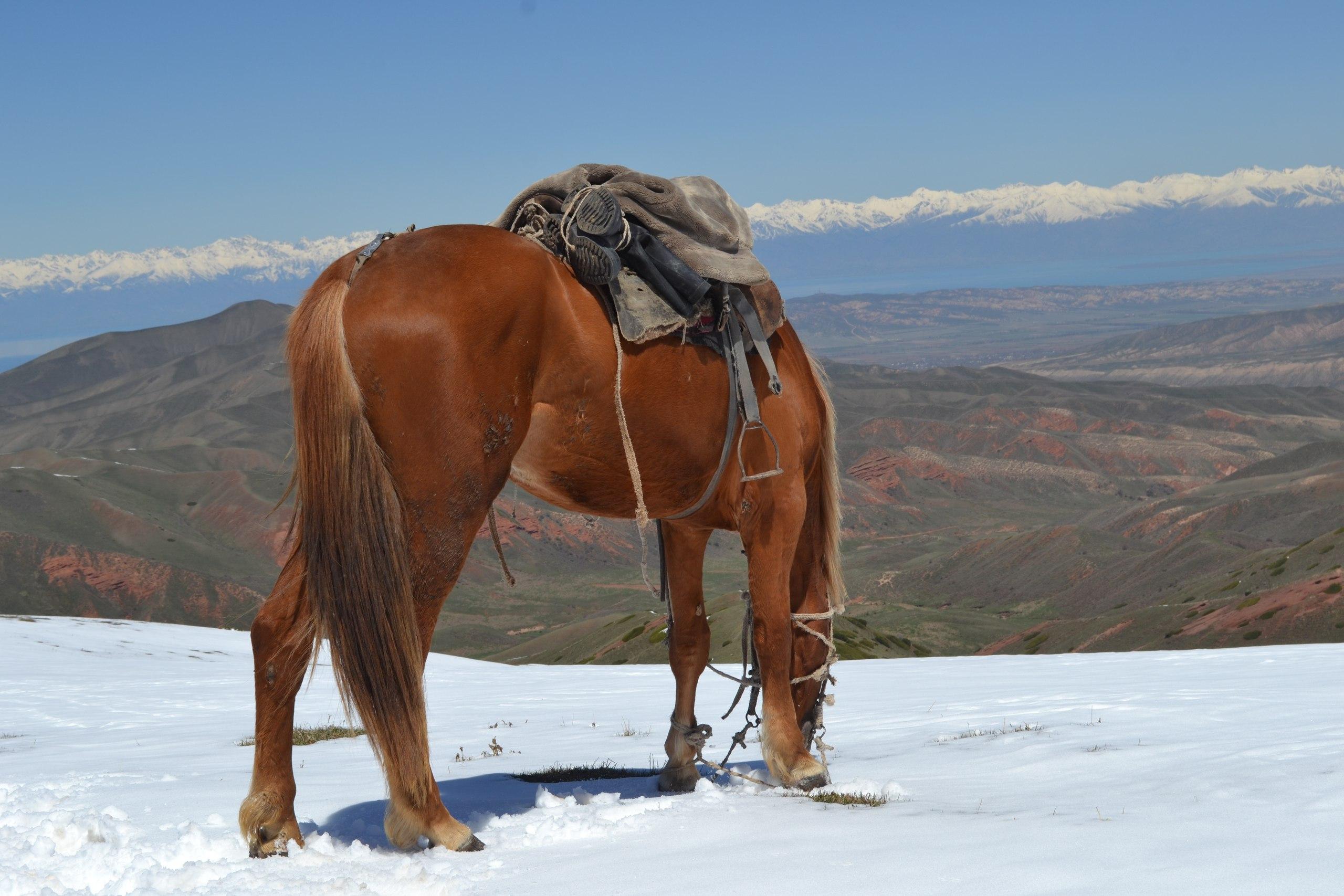 Конный тур по Киргизии