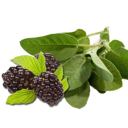 Blackberries, Sage