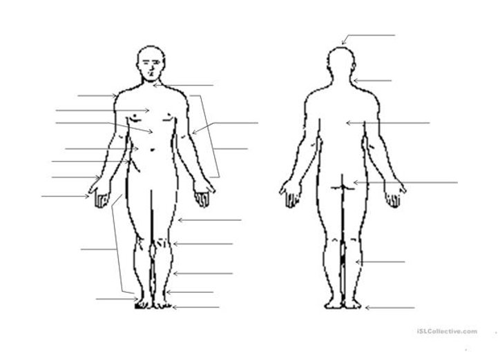 A1-A2 Human Body Worksheet - April 22 20