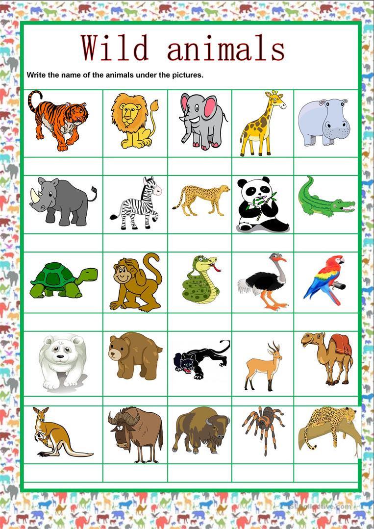 A1-A2 ESL for Kids - Wild Animals Vocabu
