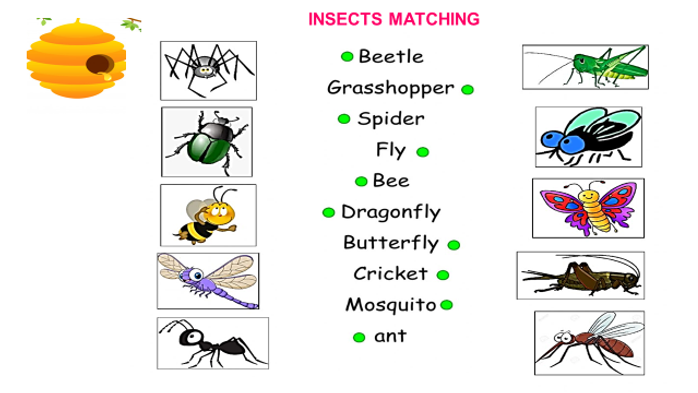 insects 4.png